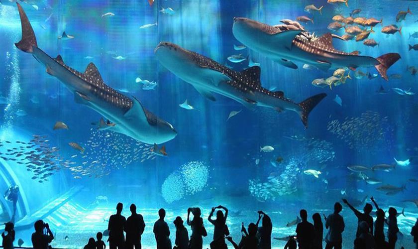 eine welt unter wasser das hurghada grand aquarium. Black Bedroom Furniture Sets. Home Design Ideas